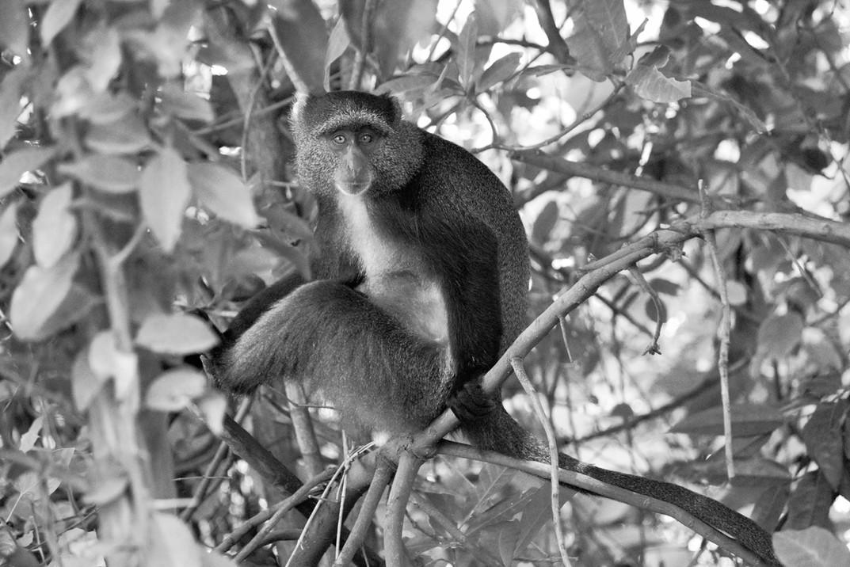 Lunch mate, Tanzania