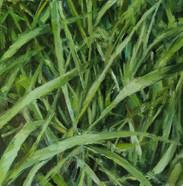 Grass, Oil on Wood Panel, 5 x 5