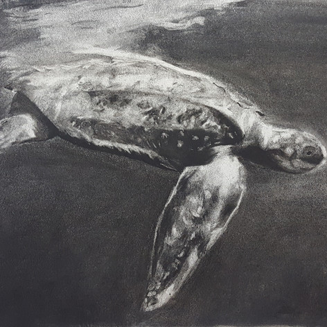 Turtle, Charcoal, Age 11