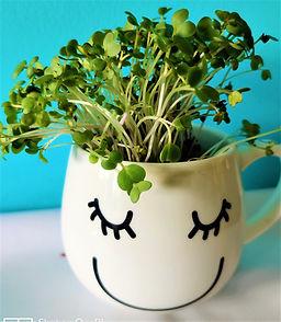 cup microgreens.jpg
