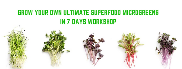 Grow your own ultimate Superfood Microgr