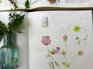 White Ermine Moth,Geranium Phaeum and Herb Bennett