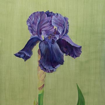 Iris Deep Black SOLD