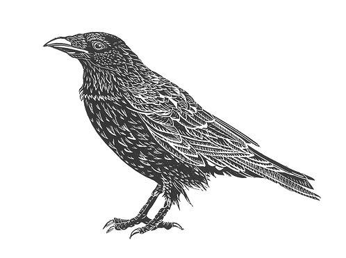 The Kindly Crow