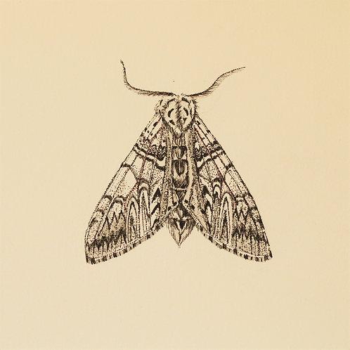 Puss Moth Original Drawing