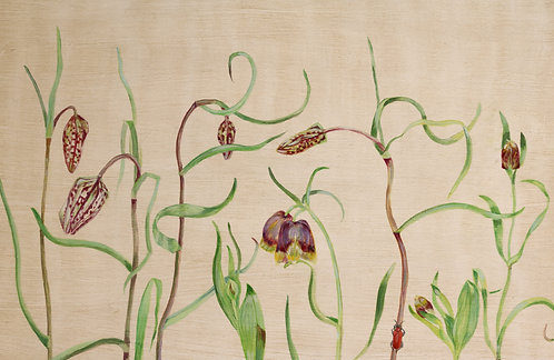 Fritillaries and Lily Beetle