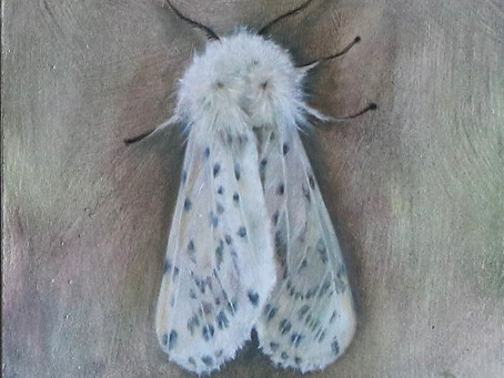 Moths and Moonshine