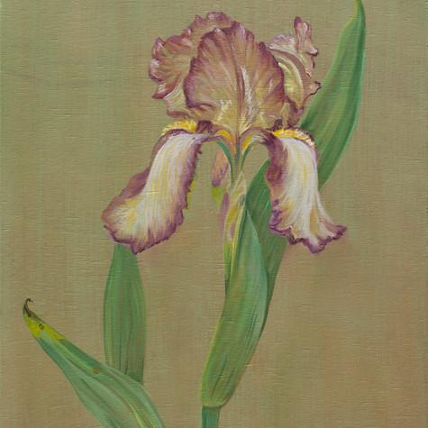 Benton iris