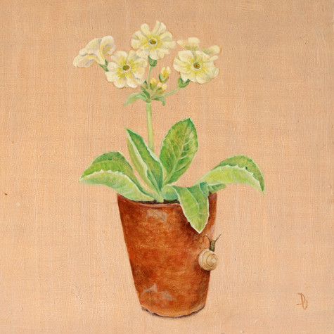 Auricula and Passenger SOLD