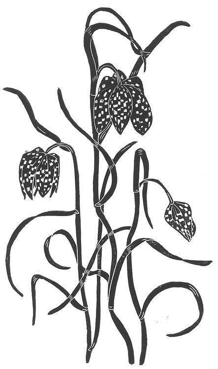 Snakeshead Fritillaries