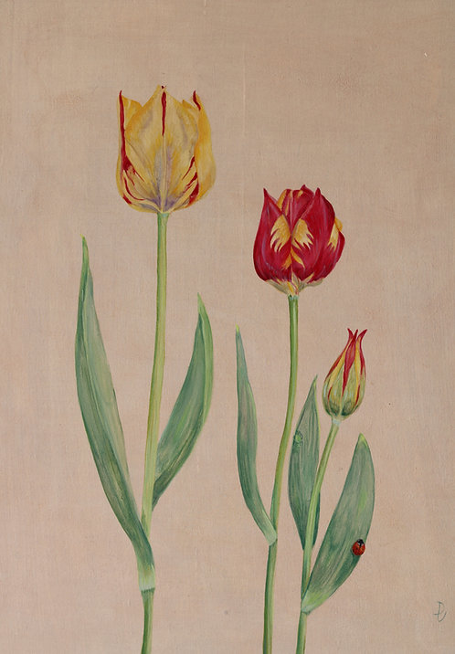 Helmar Tulips and Ladybird