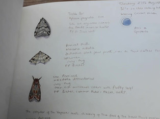 Moth studies