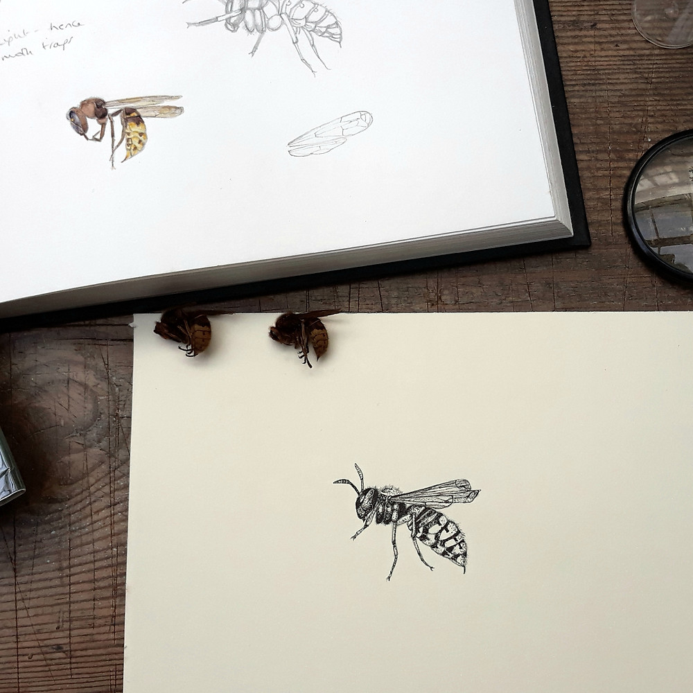 Hornet Pen and Ink Drawing