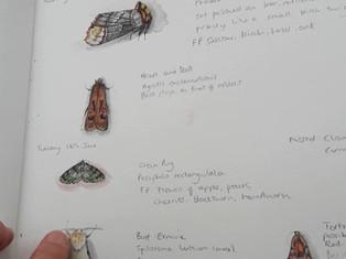 Summer moths