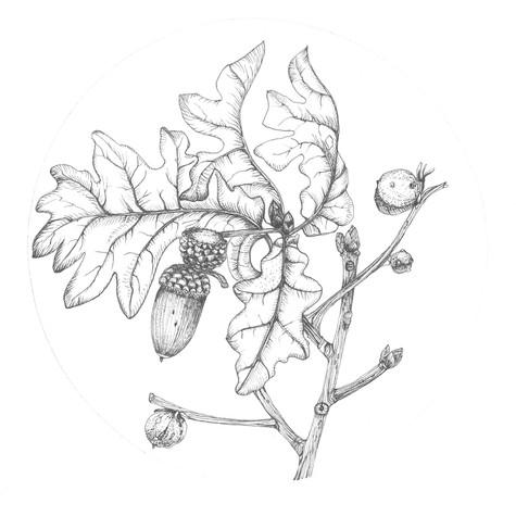 Oak SOLD