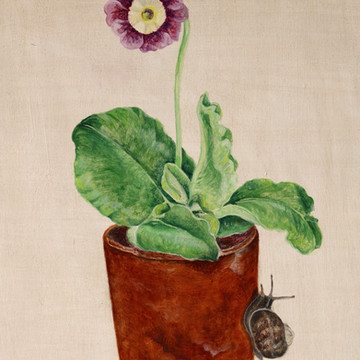 Auricula and Snail SOLD