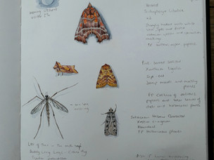 Moths of September
