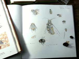 Wasps and Bumble Bes