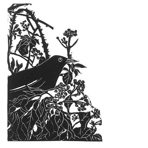 Blackbird in the Ivy