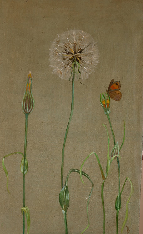 Goat's Beard and Meadow Brown SOLD