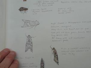 Moth studies April to May