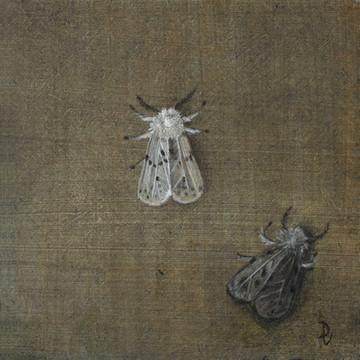 Ermine and Muslin Moths
