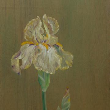 Iris Benton Susan SOLD