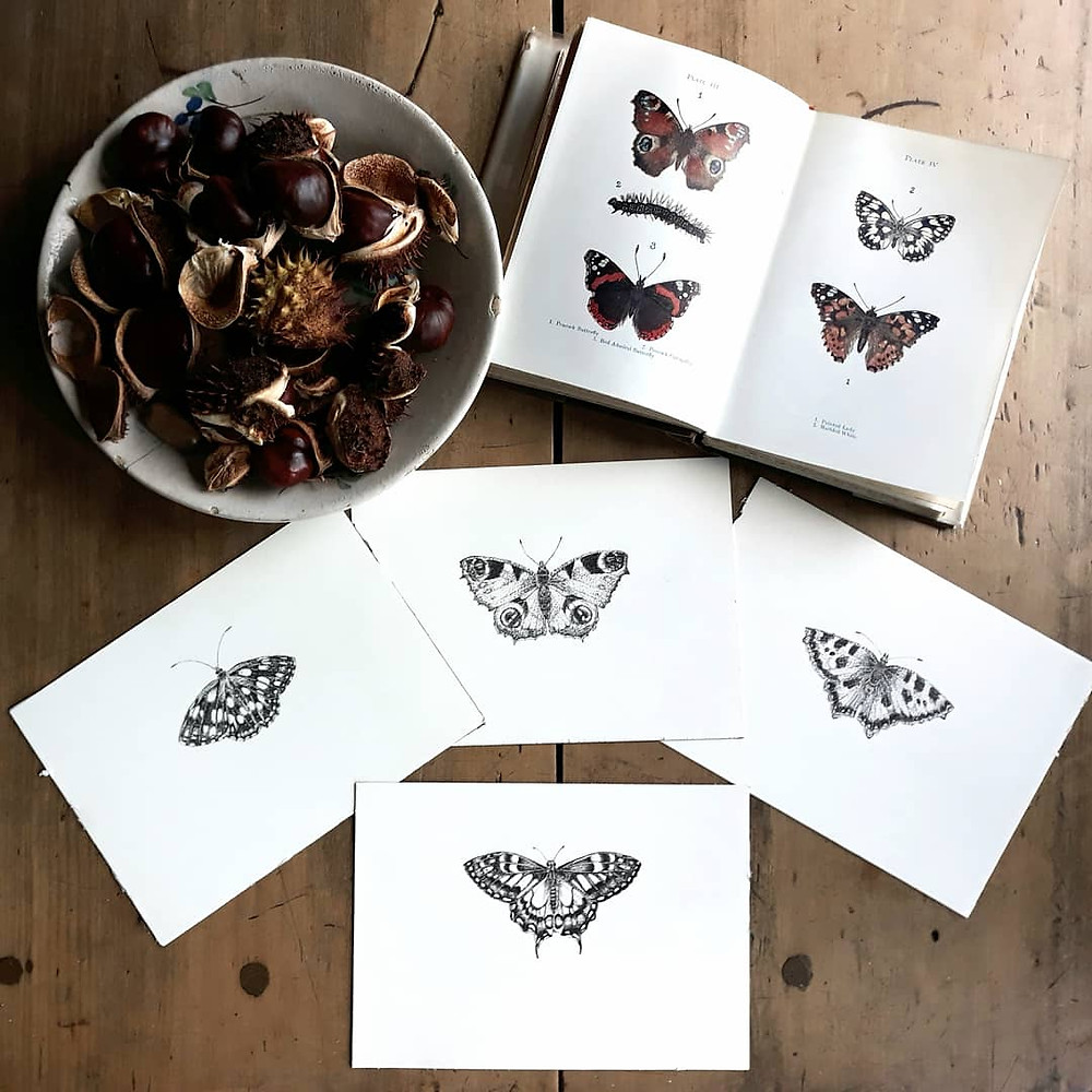 Butterflies Pen and Ink drawings