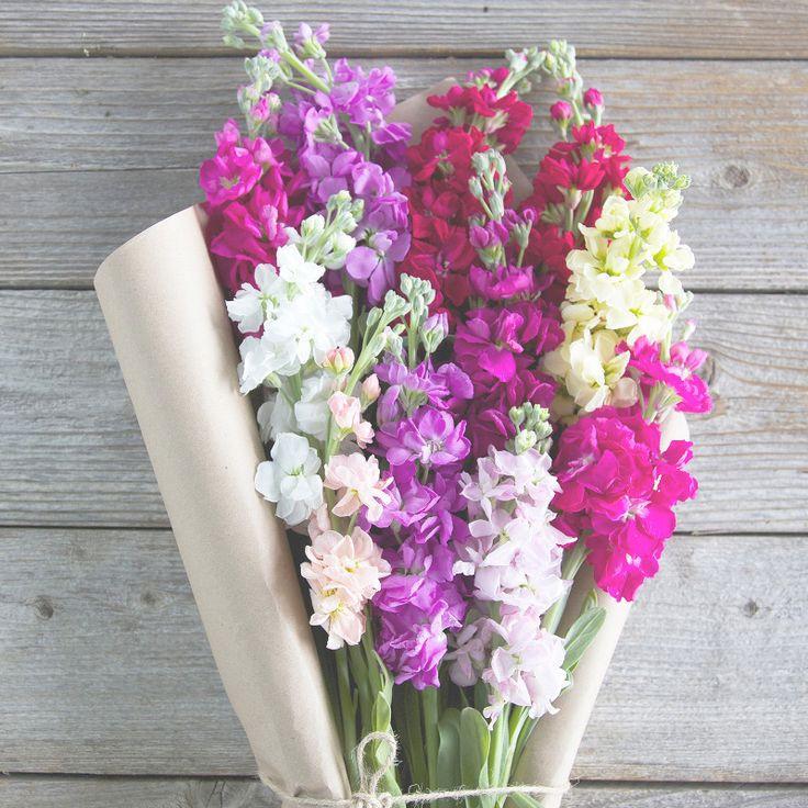 Матиола ароматный цветок в букете