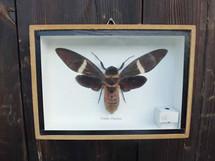 Large Flying Bug