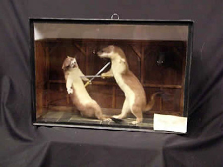 Duelling Stoats