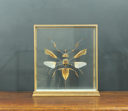 Large Exploding Insect