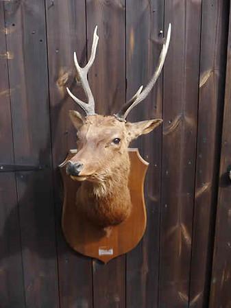 Seika Deer