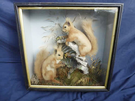 2 Red Squirrels