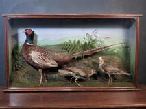 English Pheasant / 2 Plover