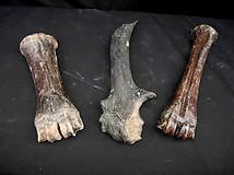 Fossilised buffalo/horse bones