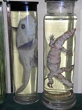 Fish / Lizard