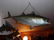 Large Sea Fish