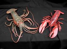 Crayfish & Lobster