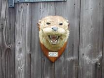 Otter Mask