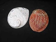 Avalone Sea Shel