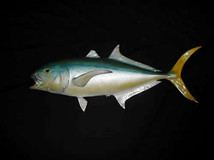 Yellow Finned Tuna