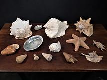 Selection of Sea Shells
