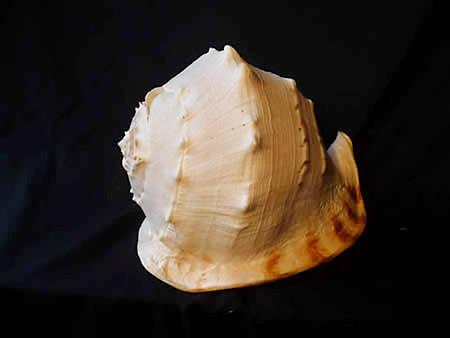 Large Helmet Shell