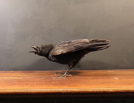 Carrian Crow