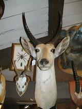 Reed Buck