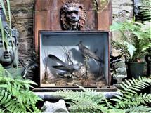 Pair of Cuckoos