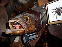 Deep Sea Fish Head