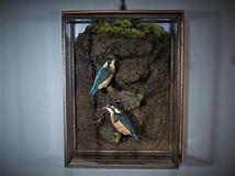 Pair of Kingfishers