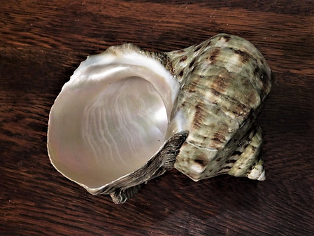 Large Green Shell